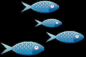 L 39 acquario di valerio rizzo negozio acquari messina ed for Acquisto pesci online
