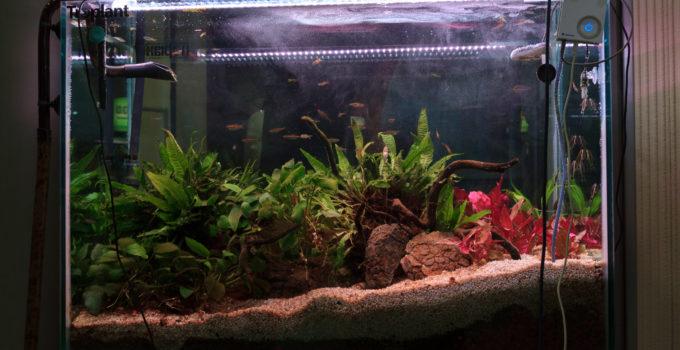 L 39 acquario chiavi in mano l 39 acquario di valerio rizzo for Comprare un acquario