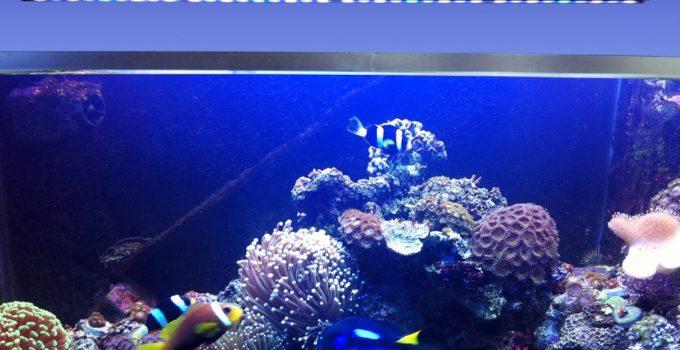 Come si illumina un acquario l acquario di valerio rizzo