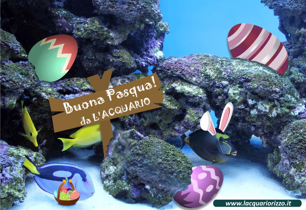 Tanti auguri di buona pasqua l 39 acquario di valerio rizzo for Acquario shop online