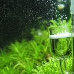 CO2 in Acquario… a cosa serve?