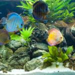 Ecco il segreto per allestire il vostro acquario