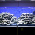 Il tuo primo acquario marino: le rocce