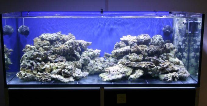 Il blog archivi l 39 acquario di valerio rizzo for Comprare un acquario