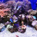 Il tuo primo acquario marino: pronti a mettere l'acqua