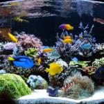 Cos'è la TRIADE in un acquario marino?